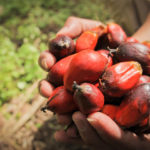 Newly Released Guidance Aims to Improve Transparency in the Palm Oil Industry
